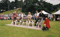 01 Best Group Of Foxhounds 2005 Eskdale And Ennerdale